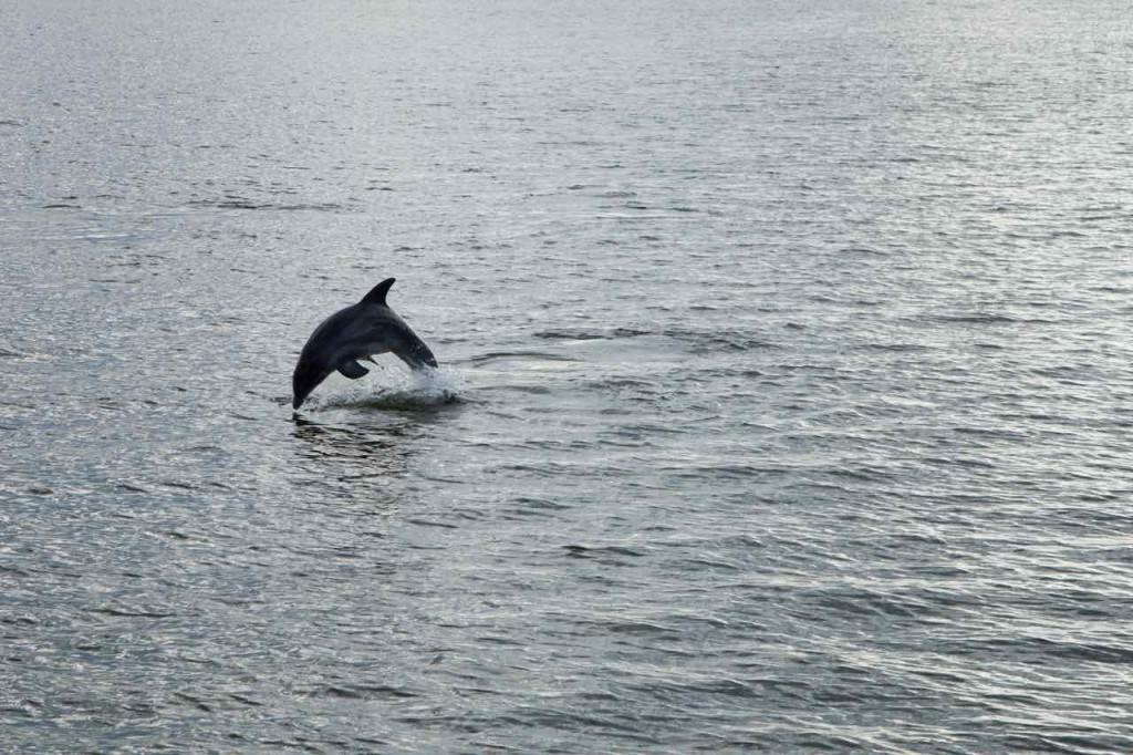 Dolphin_Cruise-3bis